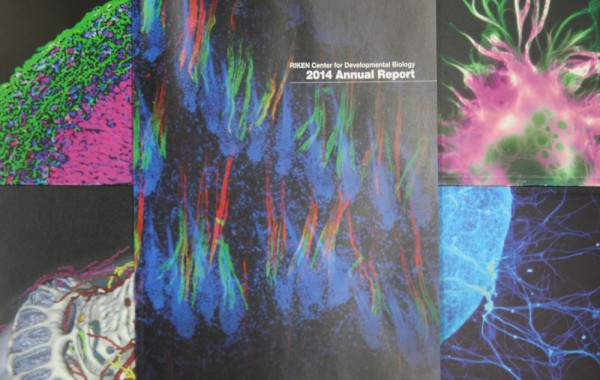 理化学研究所 多細胞システム形成研究センター(CDB)様 年次報告書