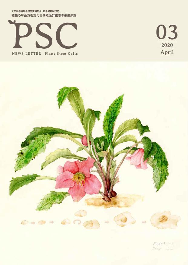 植物の生命力を支える多能性幹細胞の基盤原理